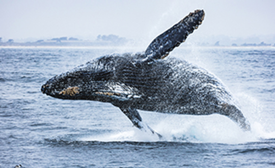 Avoid These Wildlife Photography Mistakes