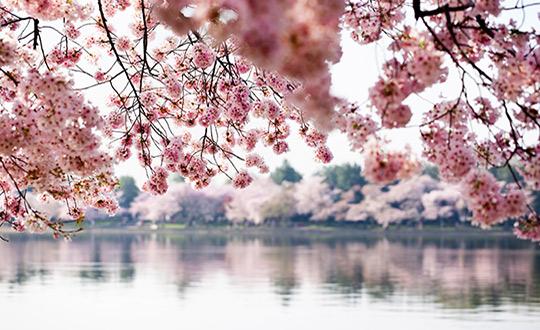 Take Better Springtime Photos
